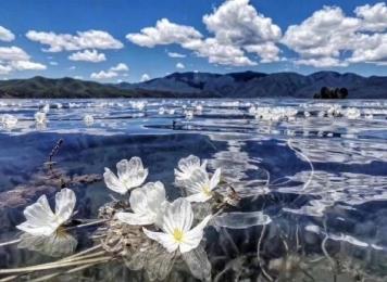 每年到了海藻花盛开的时候,就是泸沽湖最美的时间❤ ...